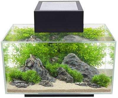 nano aquarium kaufen tipps vergleichstest aquarium grundlagen. Black Bedroom Furniture Sets. Home Design Ideas