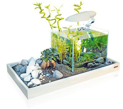 nano aquarium kaufen tipps vergleichstest aquarium. Black Bedroom Furniture Sets. Home Design Ideas